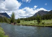 River Through Yellowstone