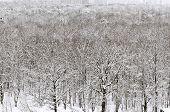 White Snowbound Urban Garden In Winter