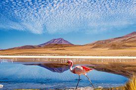 image of pink flamingos  - Laguna at the  - JPG