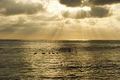 image of water bird  - Cloud rays break through as ocean birds rest on the water - JPG