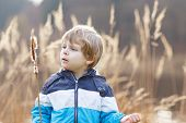 pic of bulrushes  - Little blond boy having fun with bulrush near forest lake nature on cold spring or autumn day - JPG