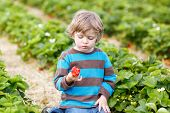 stock photo of strawberry blonde  - Funny little toddler child picking and eating strawberries on organic bio berry farm in summer on warm sunny day - JPG