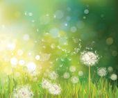 foto of dandelion  - Spring  green bokeh background with white dandelions - JPG