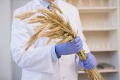 picture of scientist  - Scientist holding sheaf in the laboratory - JPG