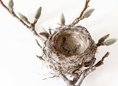 image of bird-nest  - Nature concepts - JPG
