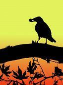 Silueta de un ave