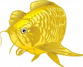 foto of dragon-fish  - Dragon Fish Vector Gold fish scales clean the tail and clean the sides - JPG