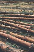 stock photo of deforestation  - Environment nature and deforestation forest concept  - JPG