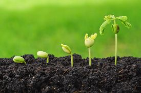pic of seed  - plants growing in sequence of seed germination on soil - JPG