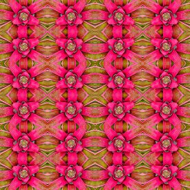 pic of bromeliad  - Bromeliad flower seamless pattern background - JPG