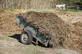 picture of big horse  - Big dung pile on a wagon at a horse farm summertime - JPG