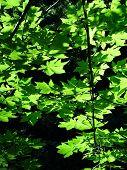 Verano verde