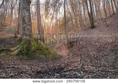 Cycling Through Forest In Sunset