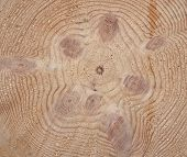Cross-section Saw Cut Of A Knotty Log Of A Pine.