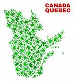 Vector Cannabis Quebec Province Map Collage. Concept With Green Weed Leaves For Weed Legalize Campai poster
