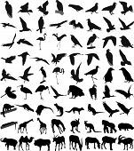 Many Silhouettes Of Different Animals And Birds poster