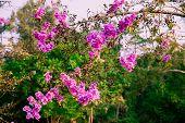 Flowers Plants, Beautiful Flowering Plants. Flowers Plants, Beautiful Flowering Plants poster