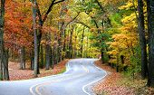 pic of fall trees  - Scenic winding road through colorful trees during autumn time - JPG