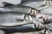 fresh fish on ice at market