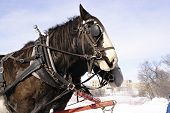 foto of hayride  - horses in winter pulling a sleigh - JPG