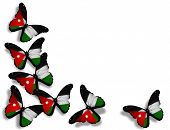 Jordanian Flag Butterflies, Isolated On White Background
