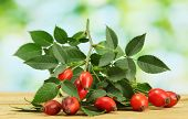 pic of wild-brier  - ripe hip roses on branch with leaves - JPG
