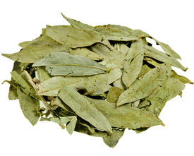 stock photo of laxatives  - dried senna  leaves  - JPG