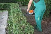 foto of electric trimmer  - A man trimming hedge in city park - JPG