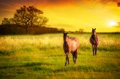 Two horses in meadow at sunset