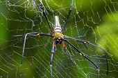 stock photo of orbs  - Close up of golden orb - JPG