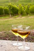 Two glasses of white Pinot wine in front of a vineyard in Alsace, France