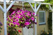 Beautiful Hanging Flowerpot Basket