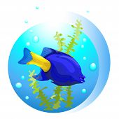 blue tropical fish