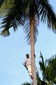 One Young African Man Is On Top Of Coconut Tree.