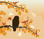 pic of songbird  - Editable vector illustration of songbirds mobbing an owl - JPG