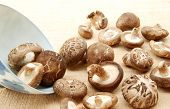 Shiitake mushroom, Authentic Chinese mushroom for health