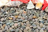 Small sea stones and shells, close up