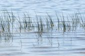 grass over water