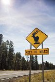 Deer Road Warning Sign, Usa
