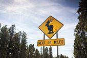 Deer Road Warning Sign, Usa