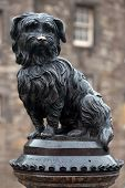 EDINBURGH - OCTOBER 07 2013 : Life-size statue of Greyfriars Bobby a Skye Terrier who spent 14 years