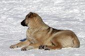 Dog Resting On Snowy Ski Slope At Nice Sun Day