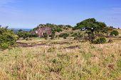 Grassy savanna, bush. Landscape of Africa. Tsavo West, Kenya.