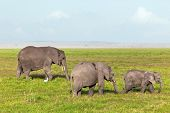 Elephants herd, family on African savanna. Safari in Amboseli, Kenya, Africa
