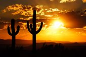 stock photo of arid  - Arizona desert sunset with giant saguaro silhouette - JPG