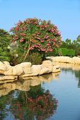Natural landscaping. Lake with stones