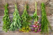 Bunches Of Healing Herbs On Wooden Wall