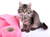 Cute kitten playing with roll of toilet paper, isolated on white
