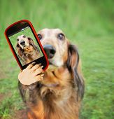 a dog taking a selfie with a camera cell phone