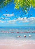 Pink Shore With Flamingos
